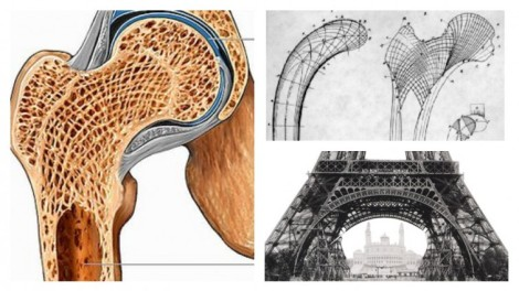 Biomimetic Eiffel Tower inspired by femur's internal structure