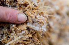 mycelium upclose